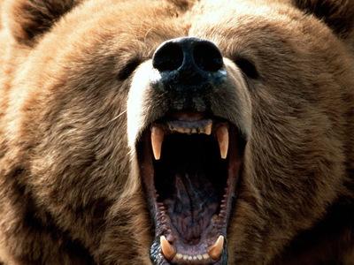В польском зоопарке мужчина подрался с медведем