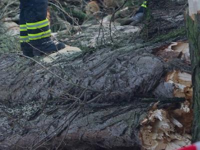 В Москве сильный ветер повалил дерево на коляски с детьми