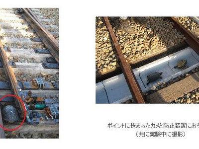 В Японии построили железнодорожные тоннели для черепах