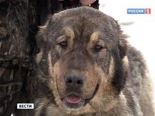 В оренбургском селе собаки загрызли хозяина M_591057
