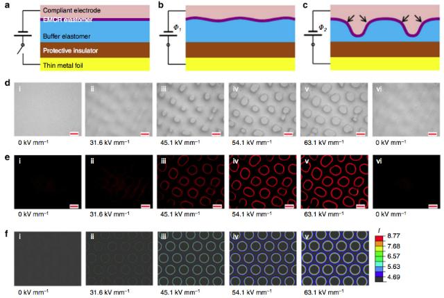 Под воздействием электрических импульсов различной силы эластомер покрывается небольшими неровностями, создавая различные флуоресцентные узоры (иллюстрация Qiming Wang et al./Nature Communications).