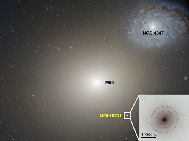 """Изображение, полученное телескопом """"Хаббл"""", показывает гигантскую галактику M60 (в центре) и сверхкомпактную карликовую галактику M60-UCD1 справа под ней (фото NASA/Space Telescope Science Institute/European Space Agency)."""