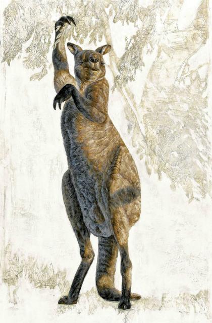 Древние кенгуру не умели прыгать (иллюстрация NGS).