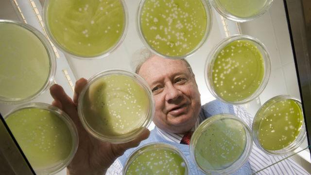 Соавтор исследования Джеймс ван Эттен (James Van Etten) собрал образцы заражённых водорослей и проанализировал их (фото University of Nebraska-Lincoln).