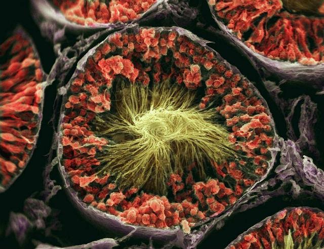 Ткань тестикул является наиболее сложной: она содержит 999 активных белков (фото Clifford Barnes, University of Ulster).