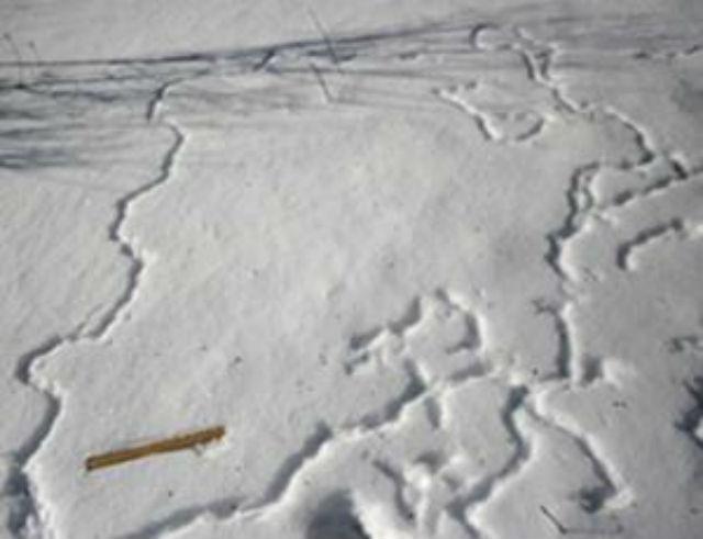 Строительство снежных туннелей — всего лишь птичьи игры, делают вывод учёные (фото Bernd Heinrich).