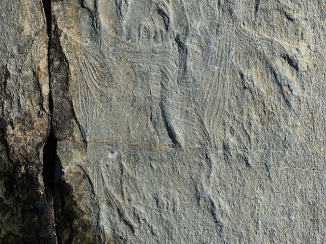Самые древние мышцы в породе, которой более полумиллиарда лет (фото Alex Liu).