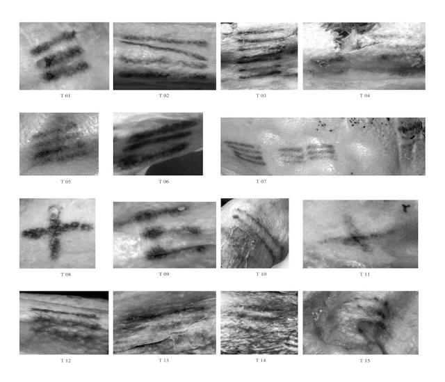 На теле 5300-летней мумии вытатуирована 61 линия (фото Marco Samadelli).