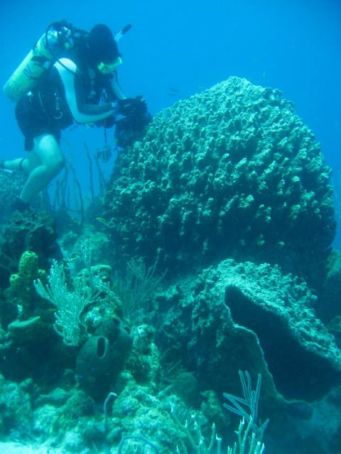 Морской биолог, занимающийся изучением рифового сообщества (фото Steven E. McMurray).