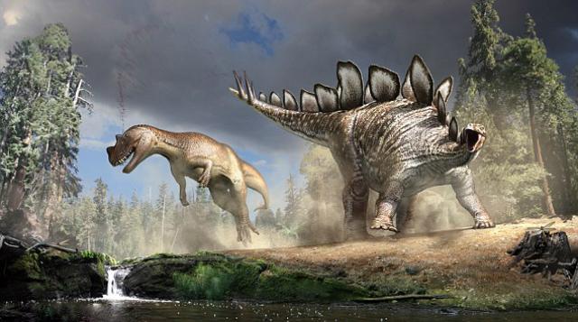 Стегозавр использовал свой шипованный хвост как грозное оружие. На одном из ископаемых образцов аллозавров (также на рисунке) были даже обнаружены следы повреждения от этих шипов (иллюстрация NHM London/Nicholls).