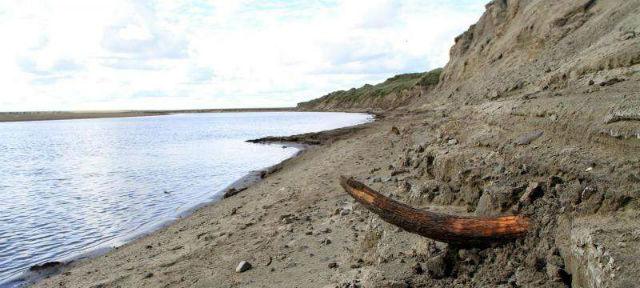Останки одного из мамонтов были обнаружены на территории Сибири (фото Love Dalén).