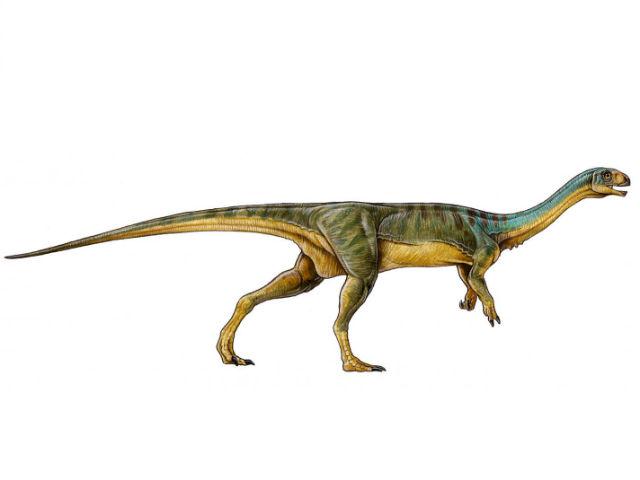 Будучи родственником тираннозавров и велоцирапторов чилизавр отличался от них длинной шеей, маленькой головой, строением зубов и наличием необычного клюва (иллюстрация University of Birmingham).