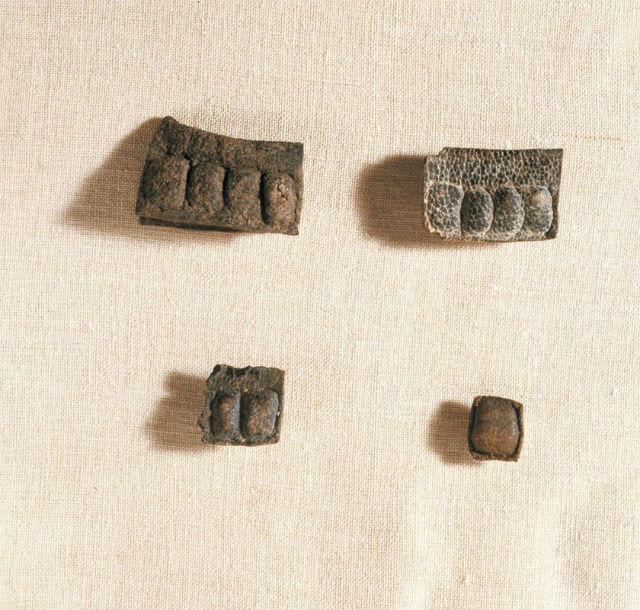 Библия и археология O_912328