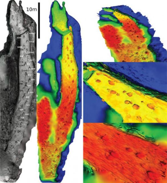 Цифровая реконструкция тропы динозавров (фото Falkingham, Bates and Farlow, PLoS ONE (2014)).
