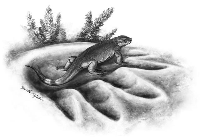Вид Eocasea martinis − самый ранний предок больших травоядных животных (иллюстрация Danielle Dufault).