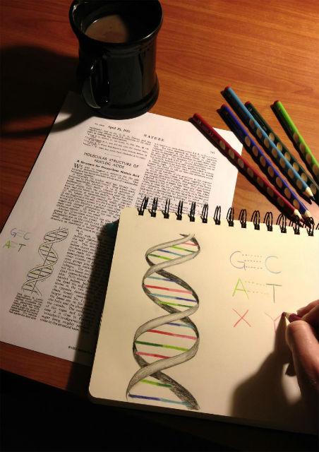 """Основания ДНК можно сравнить с буквами алфавита. Всё разнообразие жизни основывается всего на четырёх """"буквах"""" (фото Synthorx)."""