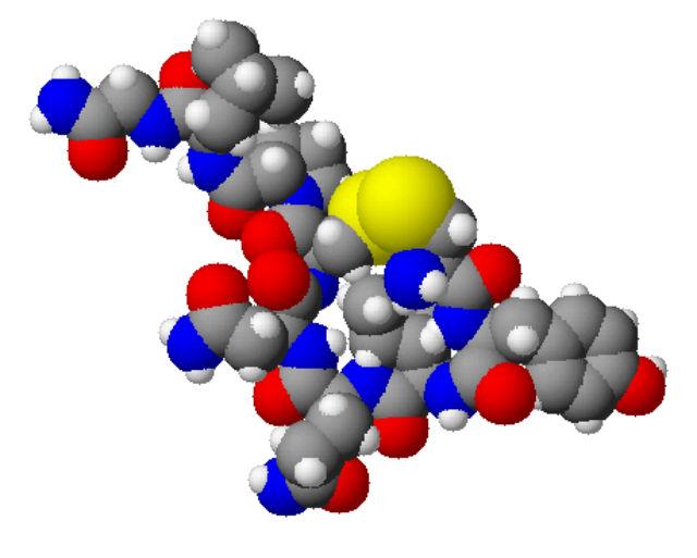 Окситоцин моет быть идеальным лекарством, спасающим мышцы от старения и возрастных заболеваний, поскольку не повышает риск развития рака (иллюстрация Wikimedia Commons).