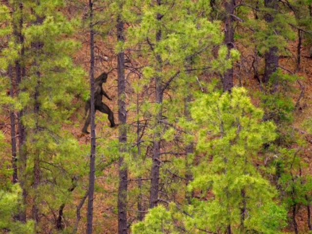Считается, что йети живут в лесах и издалека похожи на людей (фото Dale O'Dell).