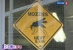 С малярийными комарами борются запахом