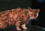 Кошки плавают по-собачьи