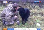 Закон и полиция не могут защитить животных