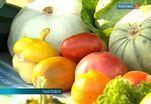 В Павловске устроили праздник урожая