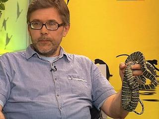 Как размножаются змеи