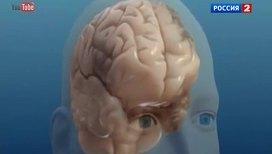 Квантовая теория души