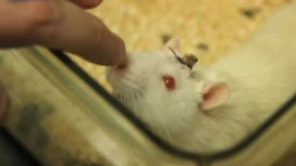 Электронный чип заменит человеческий мозг