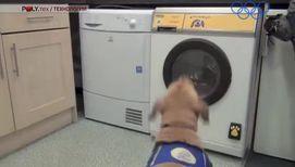 Британцы научили собак управлять стиральной машиной