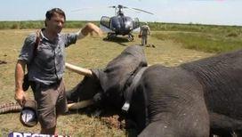 У слонов есть защитники в космосе
