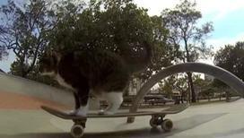 Кошка-скейтбордистка поразила Интернет