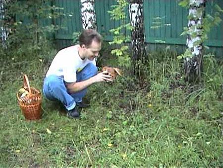 Как вырастить рыжики в домашних условиях